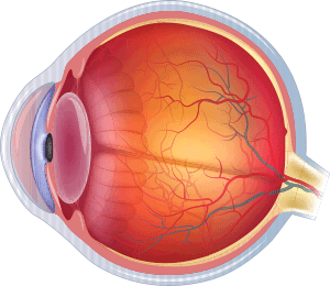 Normal Eye without Glaucoma